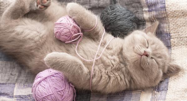 pelote de laine chat