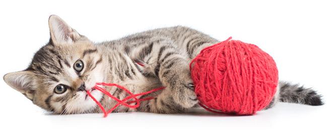 pelote de laine et chat
