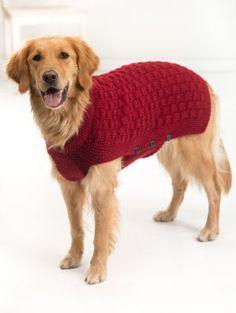 tricot laine chien